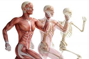 musculoskeletal-concerns